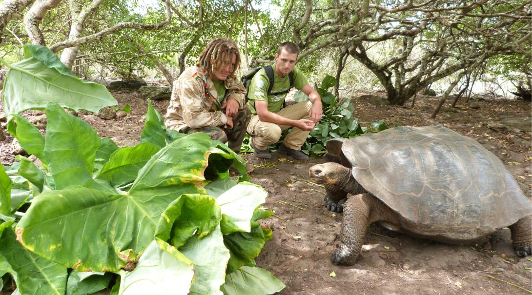Conservation interns feed a giant tortoise in the Galapagos Islands.